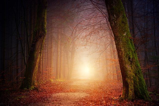 nature-3151869_640-2